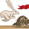 Hare The Tortoise