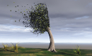 Windswept Tree 15.03.19