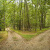 Two Roads In A Wood